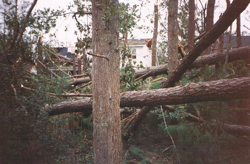 Forest Acres SC Storm Tree Damage