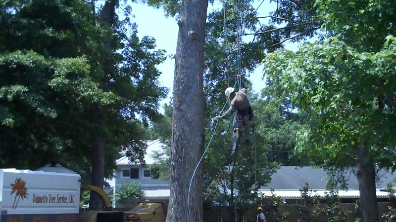 oak grove sc tree climbing