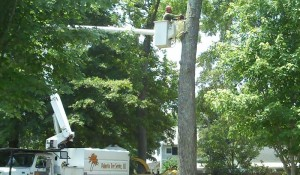 tree removal service cayce sc